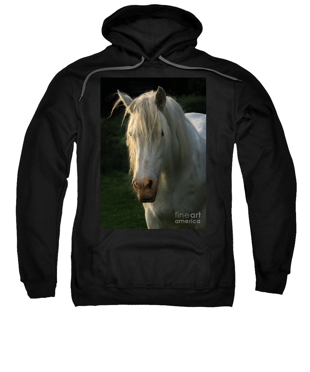Unicorn Sweatshirt featuring the photograph The Light In The Mane by Angel Ciesniarska
