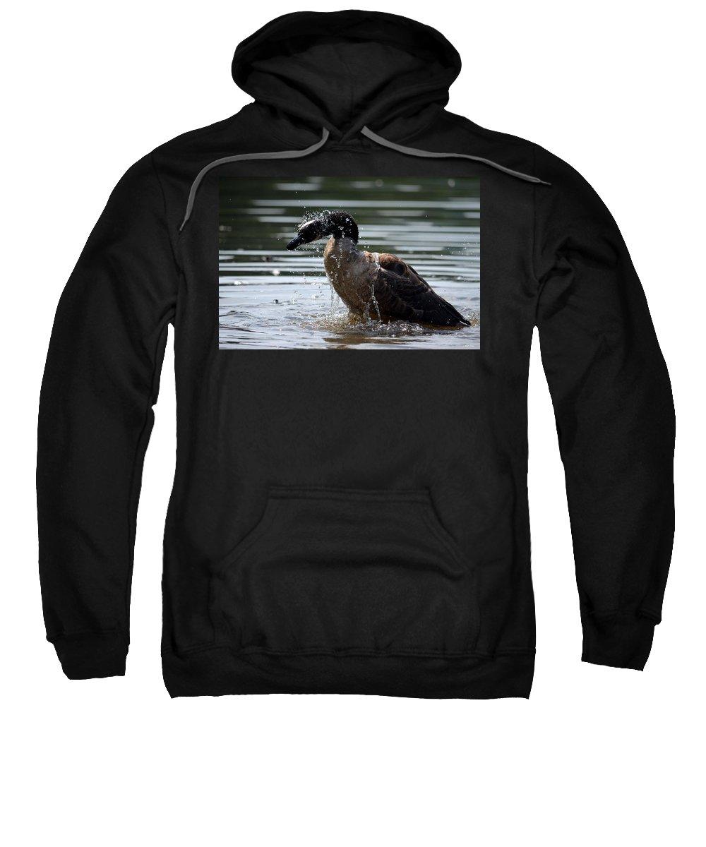 The Shake Off - Canadian Goose Sweatshirt featuring the photograph The Shake Off - Canadian Goose by Maria Urso