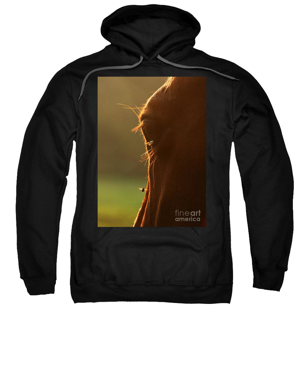 Fly Sweatshirt featuring the photograph The Silent Buzzing by Angel Ciesniarska