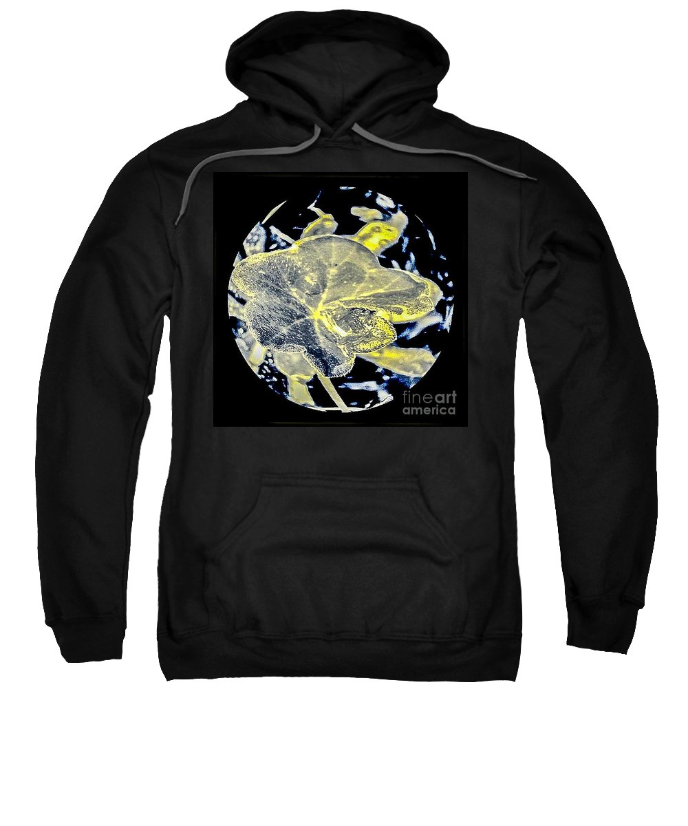 Plants Sweatshirt featuring the photograph The Veins by Fei A