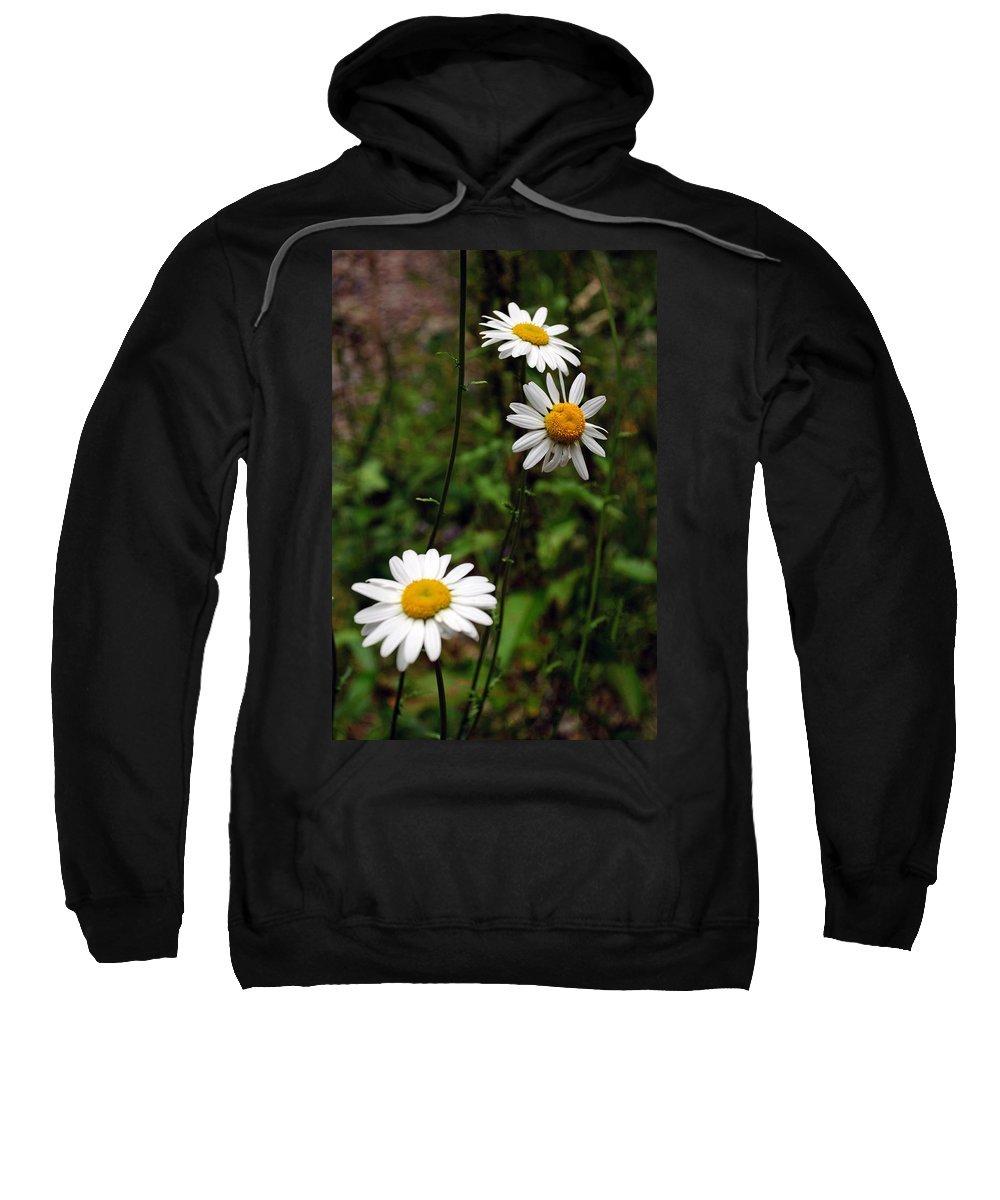 Daisy Sweatshirt featuring the photograph Three Daisies by Tikvah's Hope
