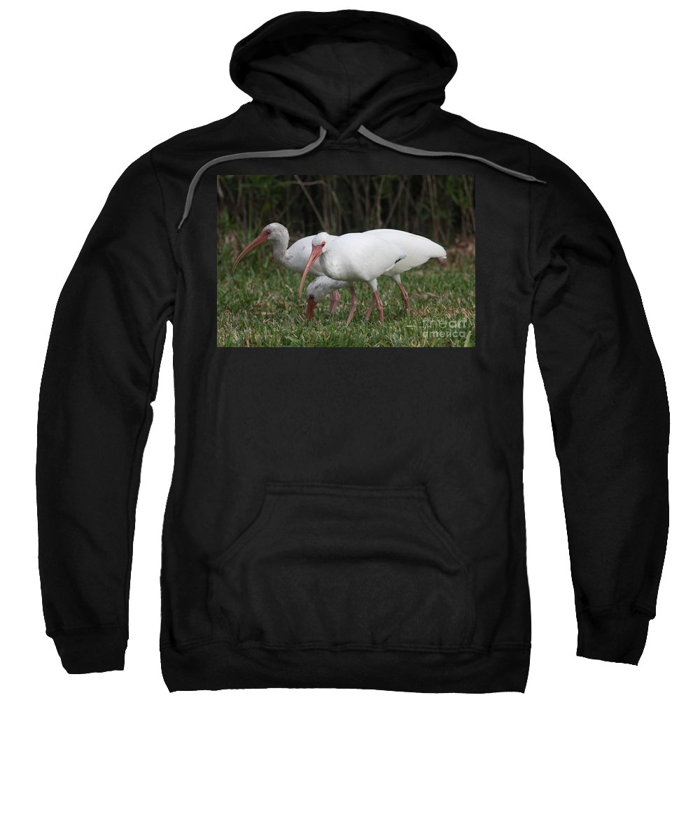 Ibis Sweatshirt featuring the photograph Three Ibis Together by Christiane Schulze Art And Photography