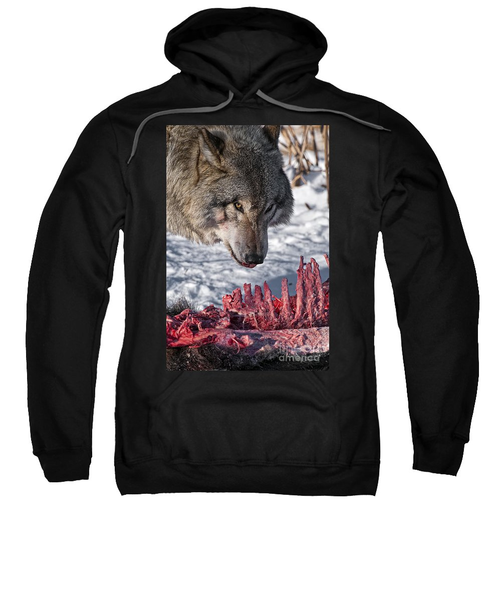 Timber Wolf Sweatshirt featuring the photograph Timber Wolf Pictures 552 by World Wildlife Photography