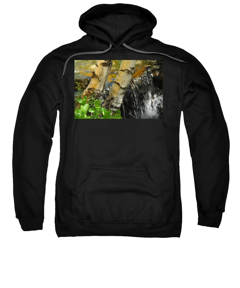 Birch Trees Sweatshirt featuring the photograph Totally Birching by Donna Blackhall
