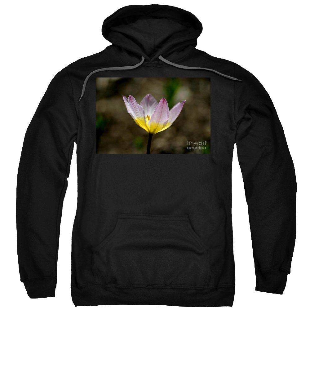 Tulip Sweatshirt featuring the photograph Translucent by Living Color Photography Lorraine Lynch