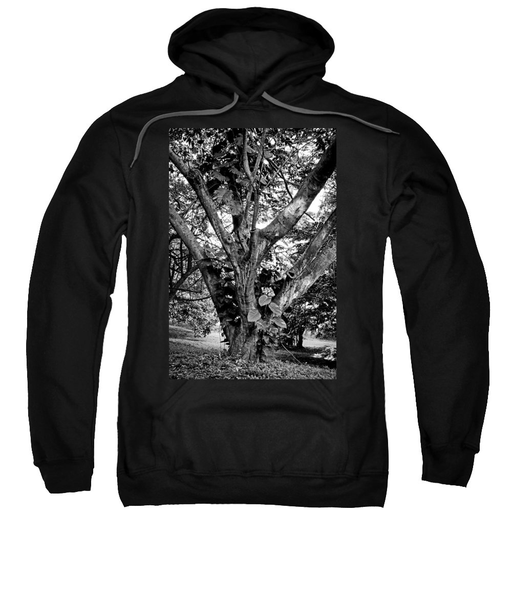 Tree Sweatshirt featuring the photograph Tree Giant by Robert Meyers-Lussier