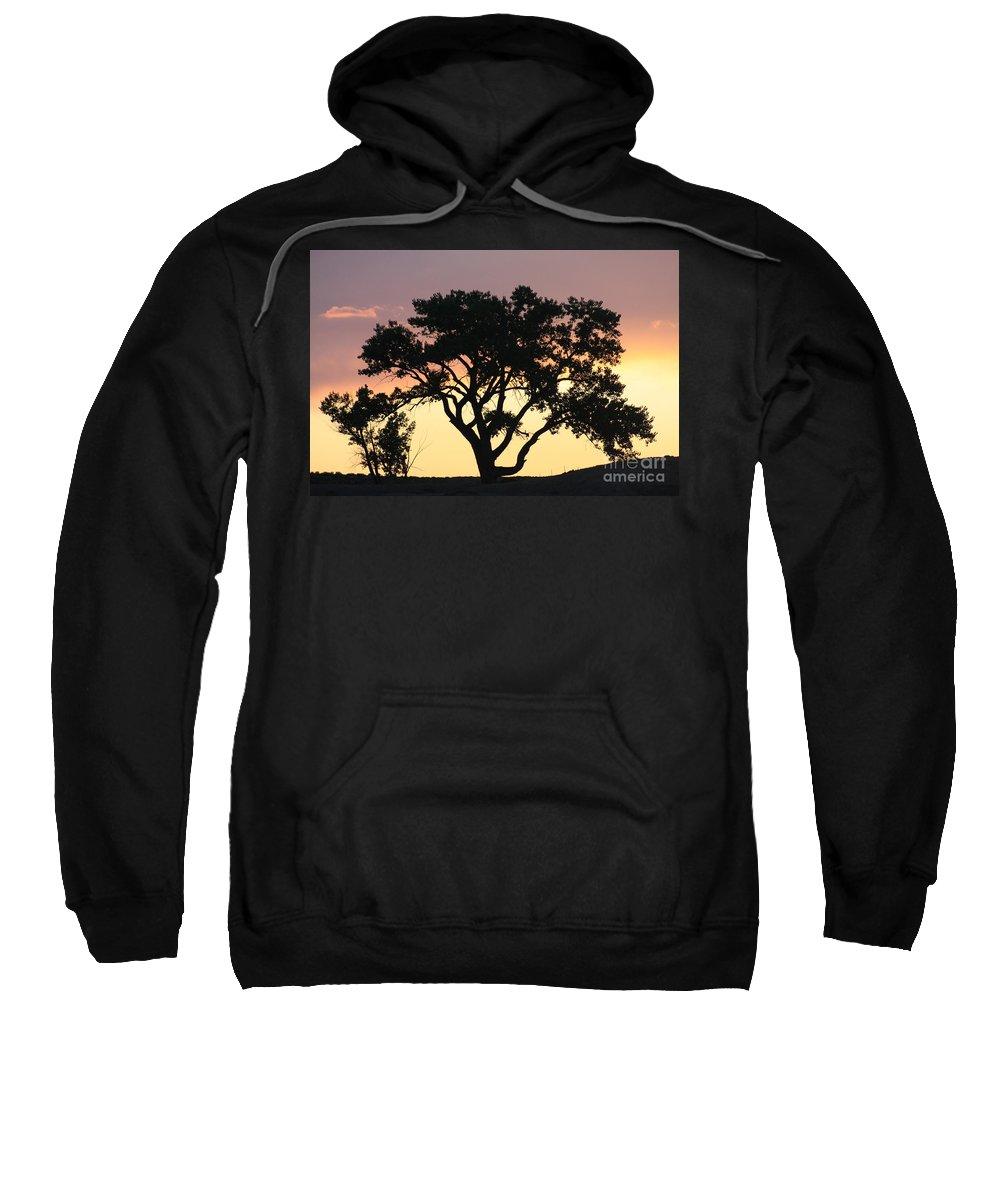 Tree Sweatshirt featuring the photograph Tree Of Life by Brandi Maher