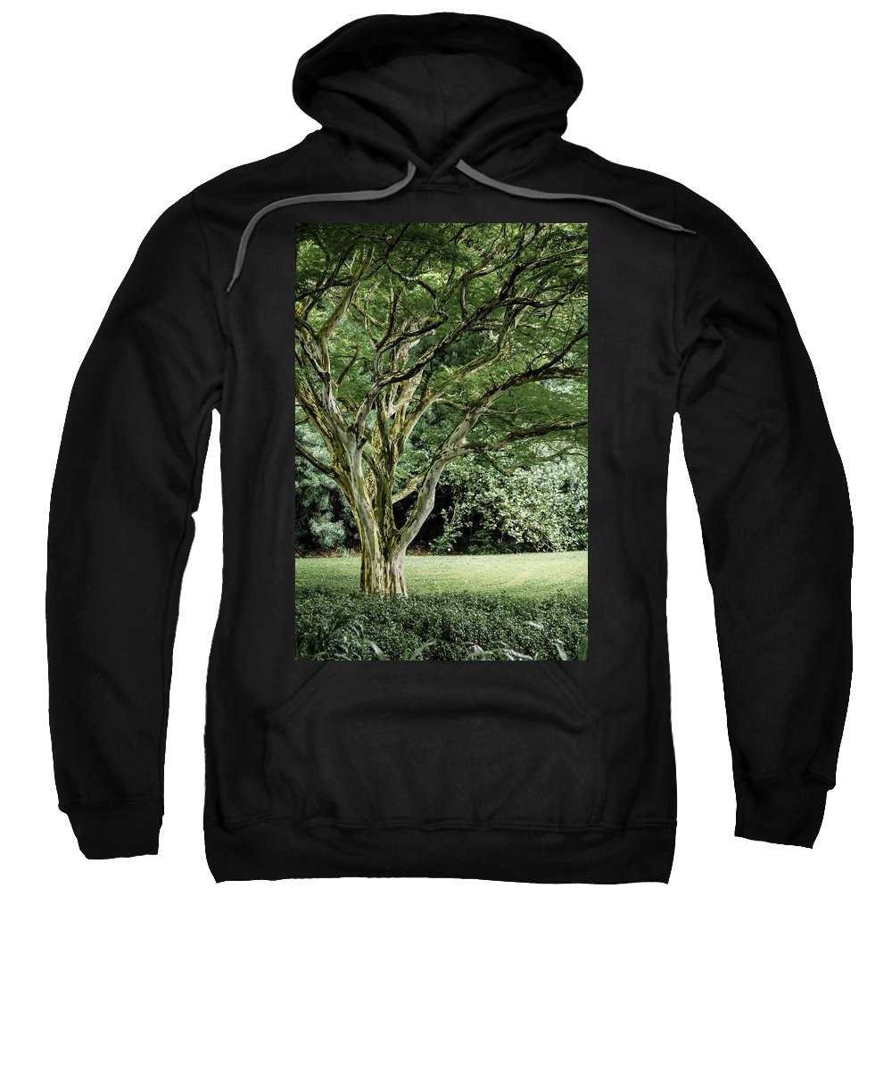 Tree Sweatshirt featuring the photograph Tree Of Life by Debbie Karnes