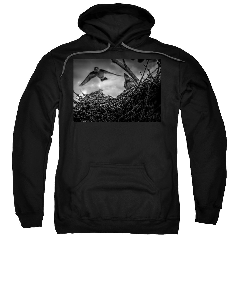 Swallow Sweatshirt featuring the photograph Tree Swallows In Nest by Bob Orsillo