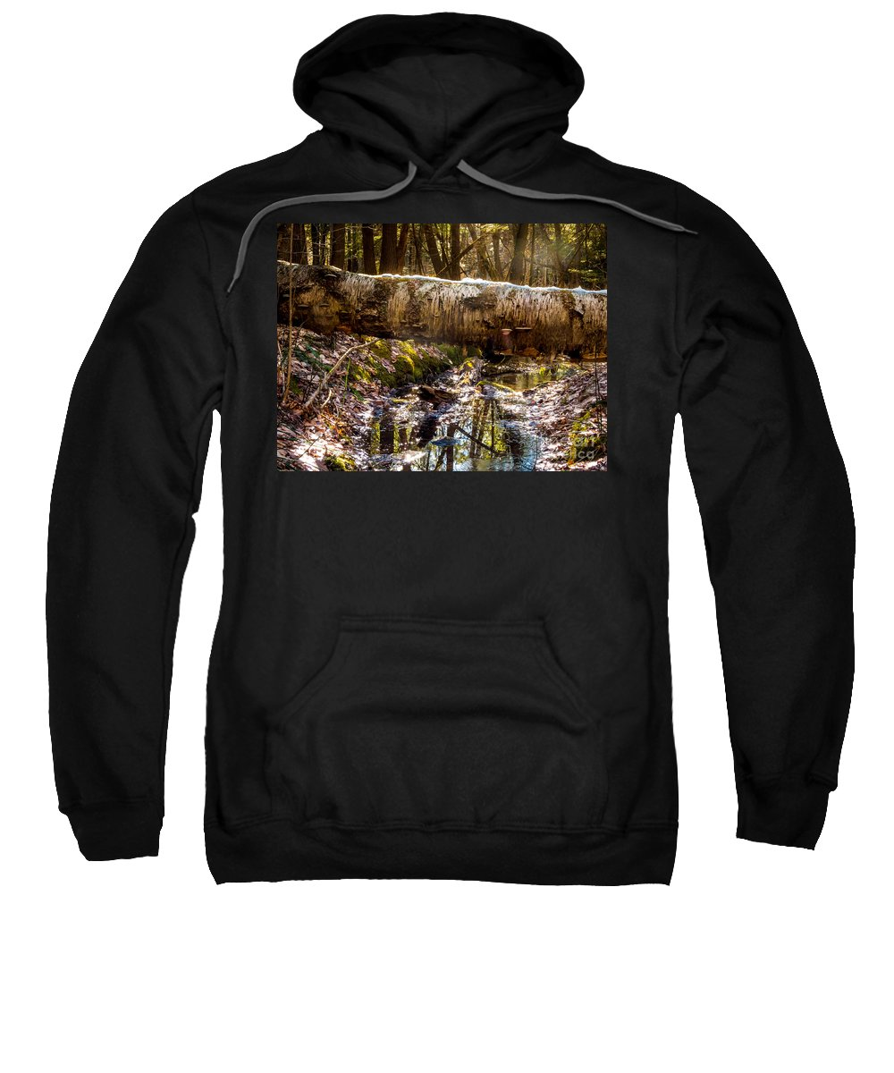 New England Sweatshirt featuring the photograph Tree Walk by DAC Photography