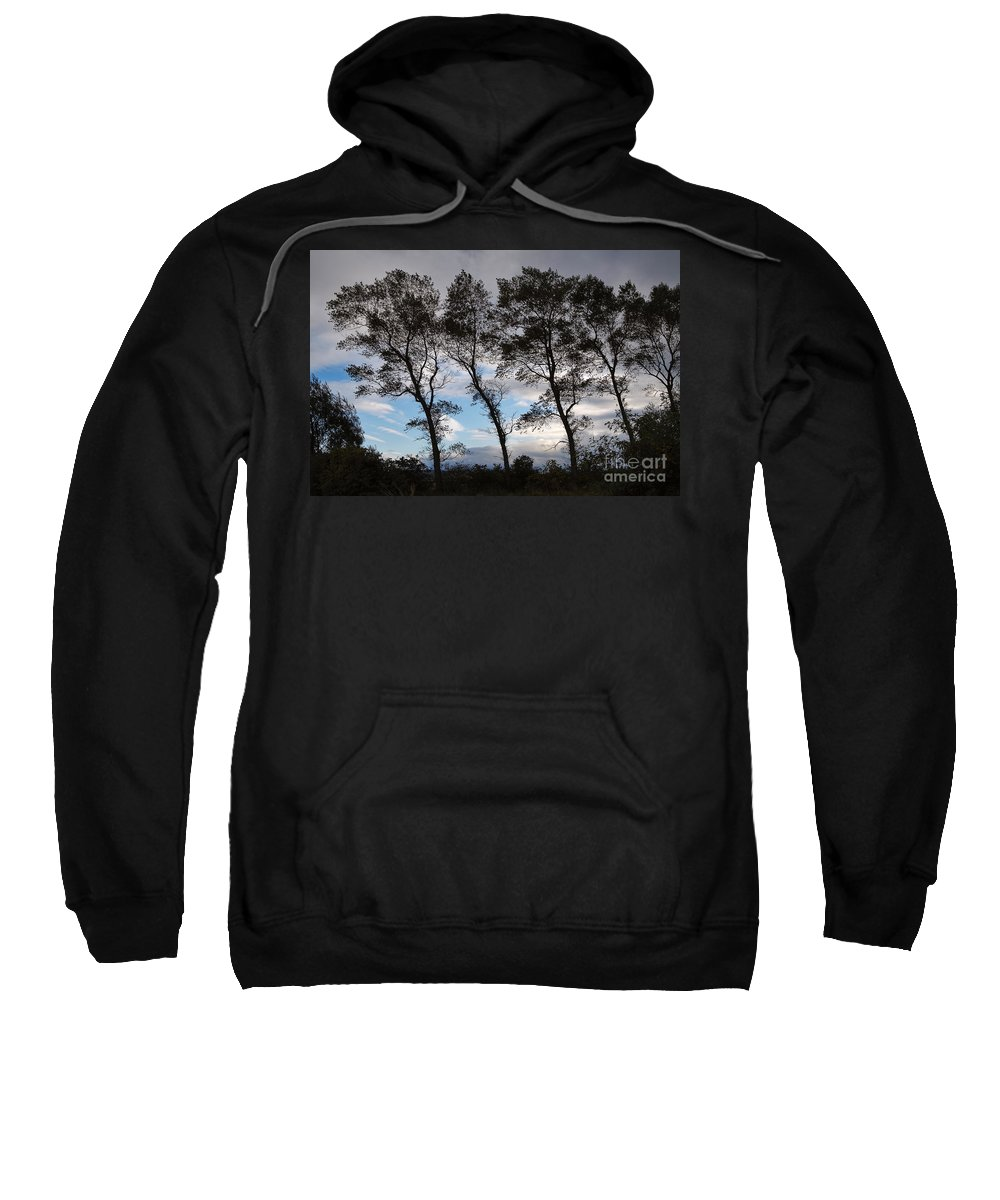 Nature Sweatshirt featuring the photograph Trees by Louise Heusinkveld