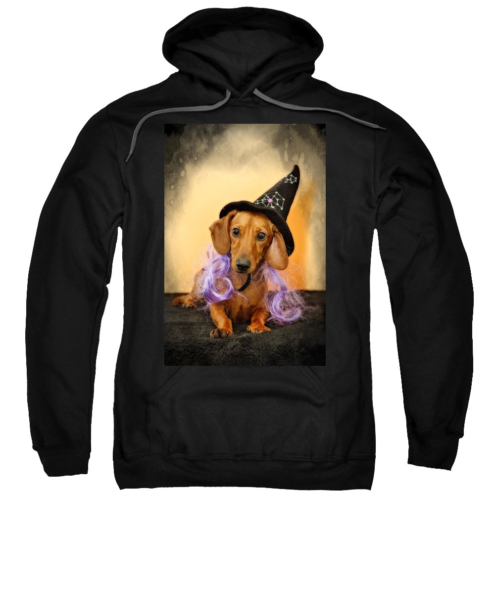 Dachshund Sweatshirt featuring the photograph Trick Or Treat by Susan Candelario