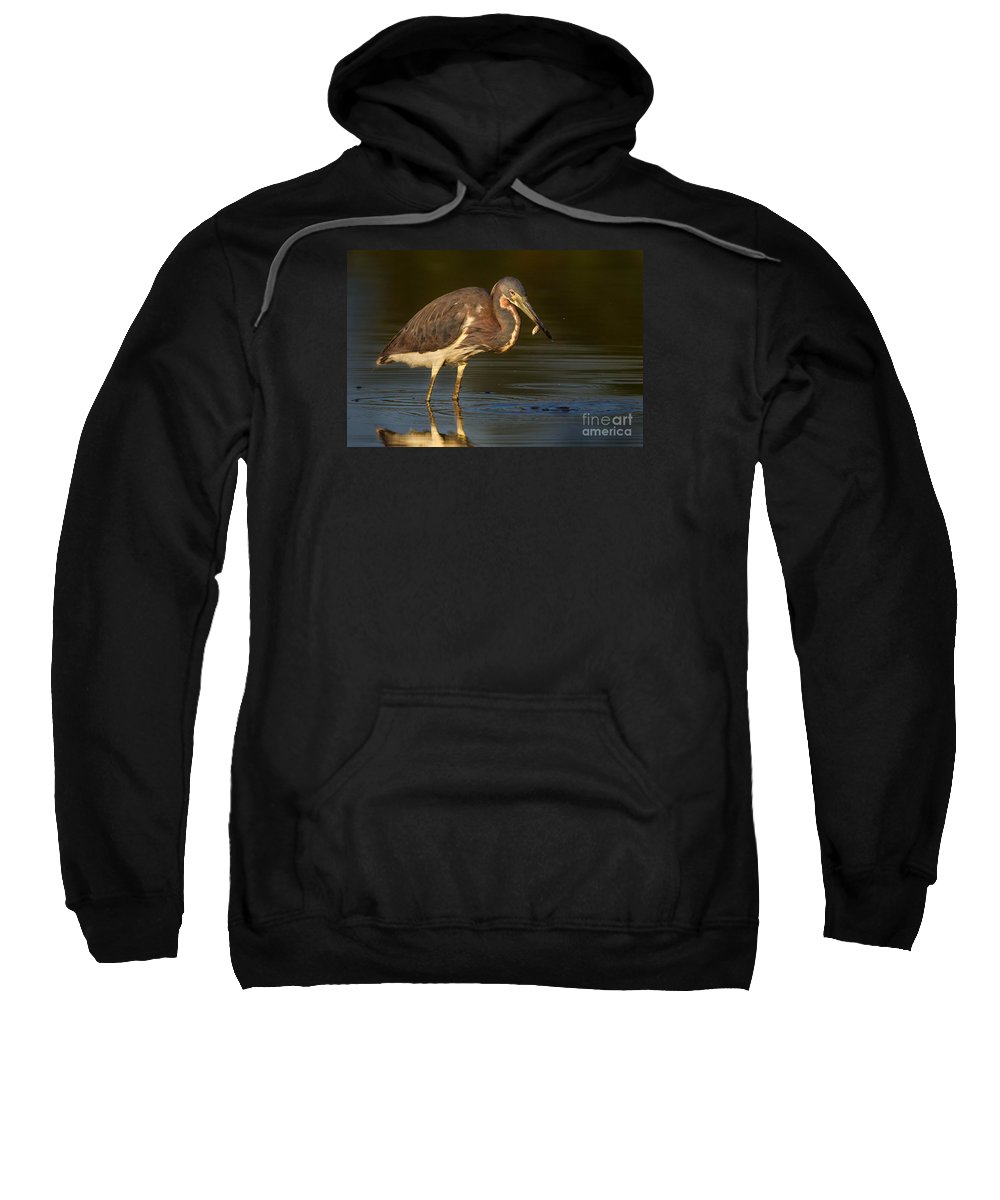 Bird Sweatshirt featuring the photograph Tricolored Heron With Fish by Jerry Fornarotto