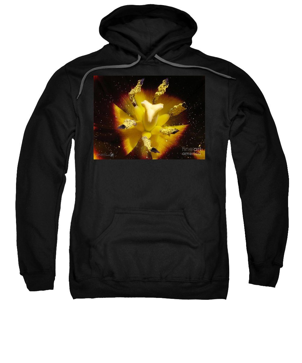Mccombie Sweatshirt featuring the photograph Triumph Tulip Named Gavota by J McCombie