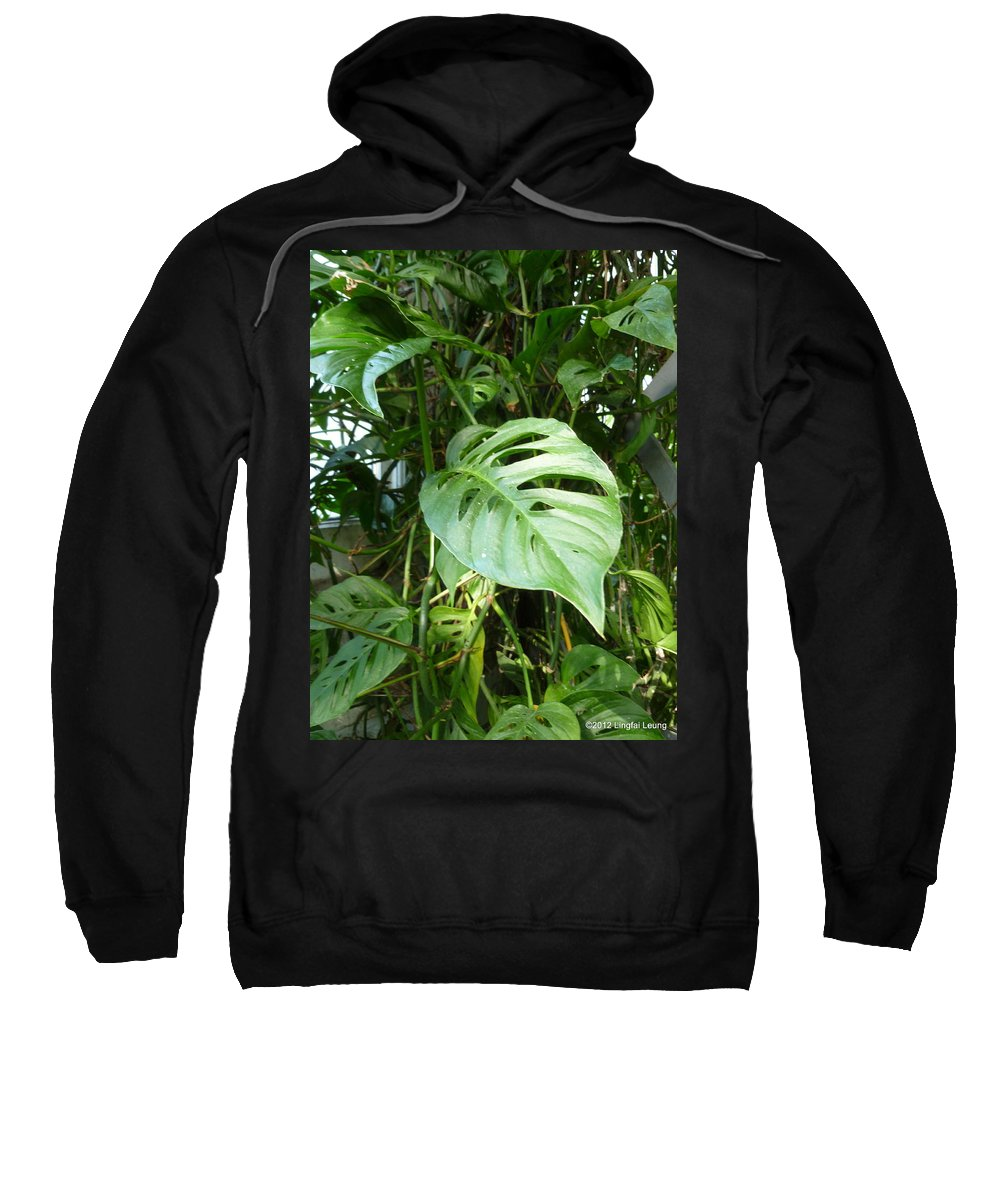 Vivid Sweatshirt featuring the photograph Tropical Green Foliage by Lingfai Leung