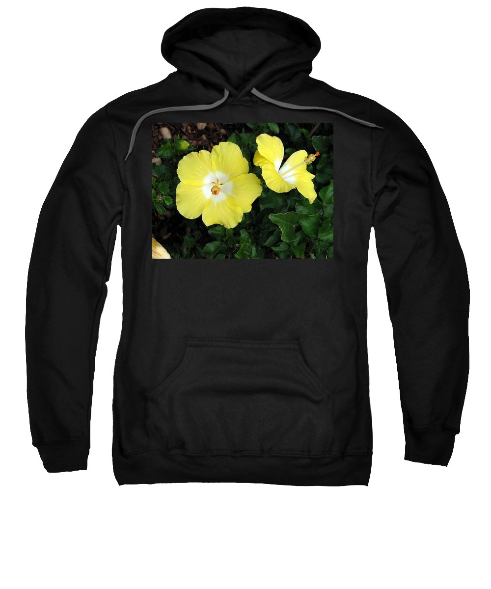Hibiscus Sweatshirt featuring the photograph Tropical Hibiscus - Bonaire Wind 02 by Pamela Critchlow