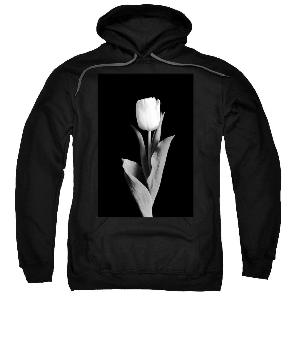 Tulip Sweatshirt featuring the photograph Tulip by Sebastian Musial