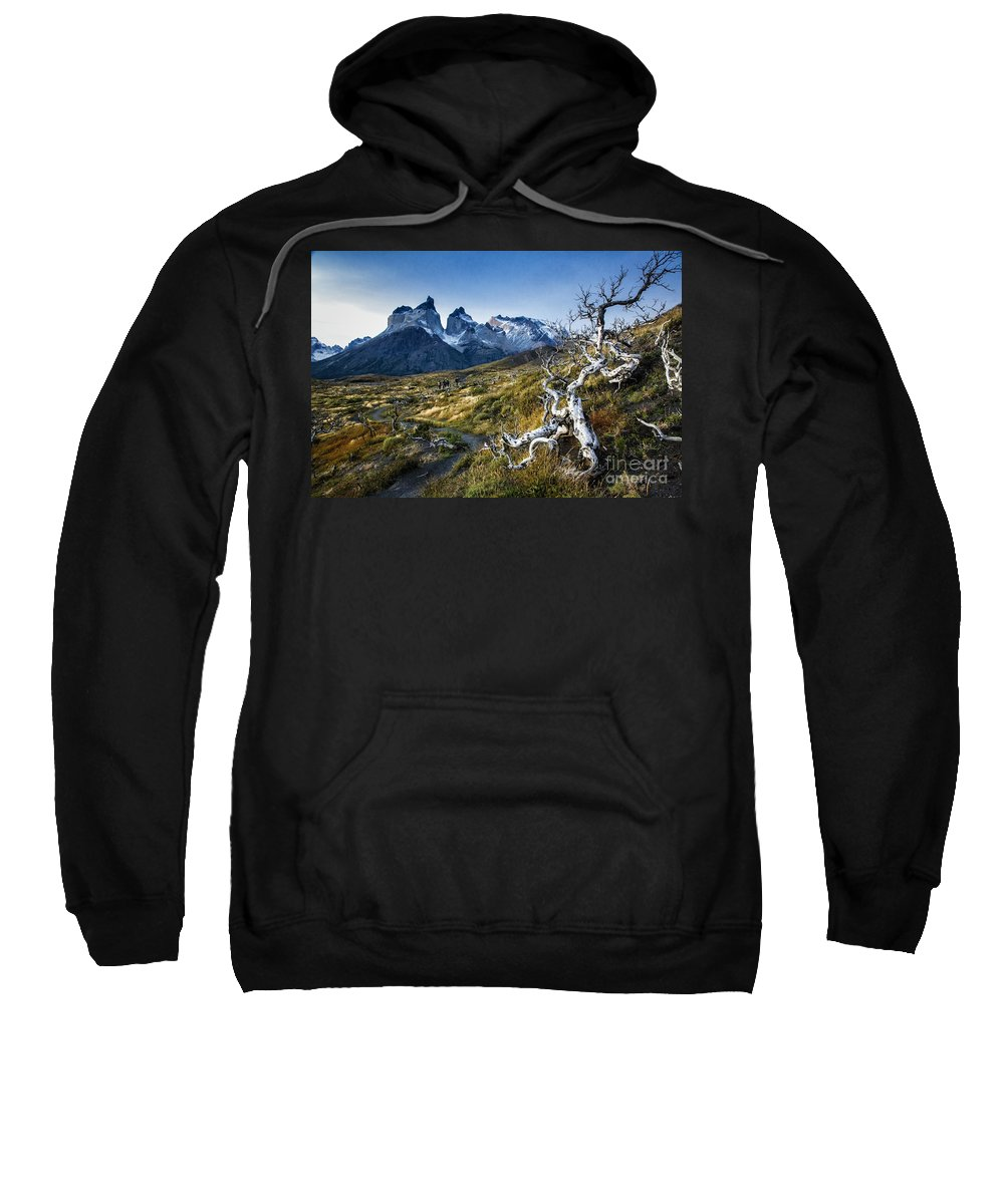Patagonia Sweatshirt featuring the photograph Twisted Tree And Trail by Timothy Hacker