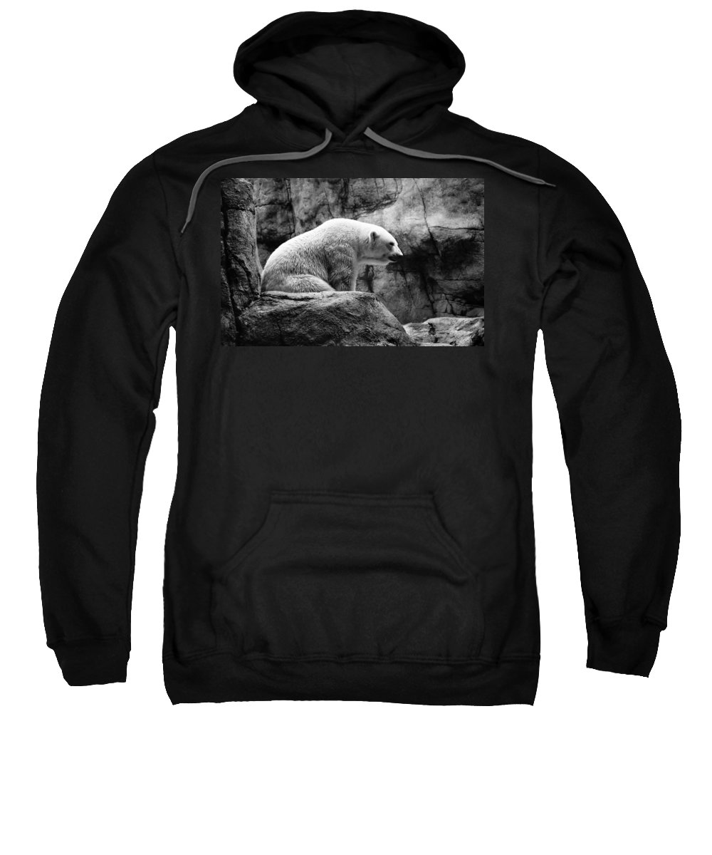 Polar Bear Sweatshirt featuring the photograph Waiting For Winter by Bill Pevlor