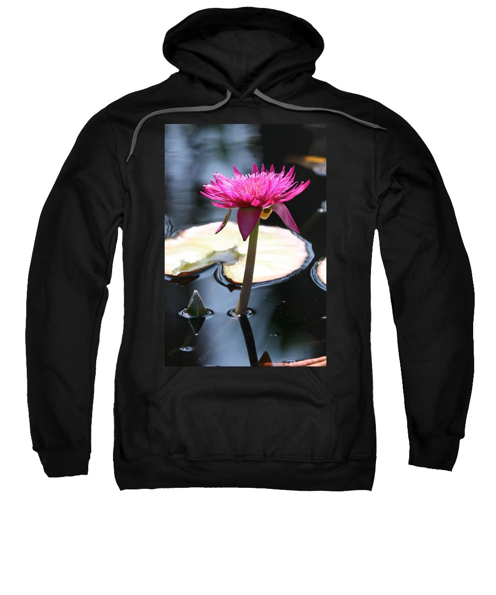 Waterlily Sweatshirt featuring the photograph Pink Water Lily by Ian Mcadie