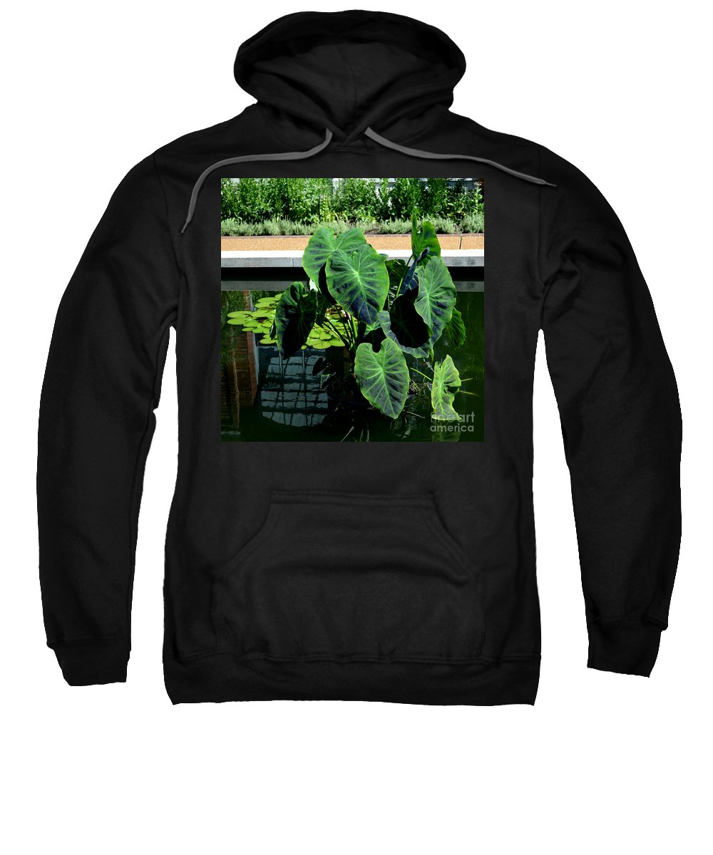 Pamela Briggs Luther Sweatshirt featuring the photograph Water Plants by Luther Fine Art