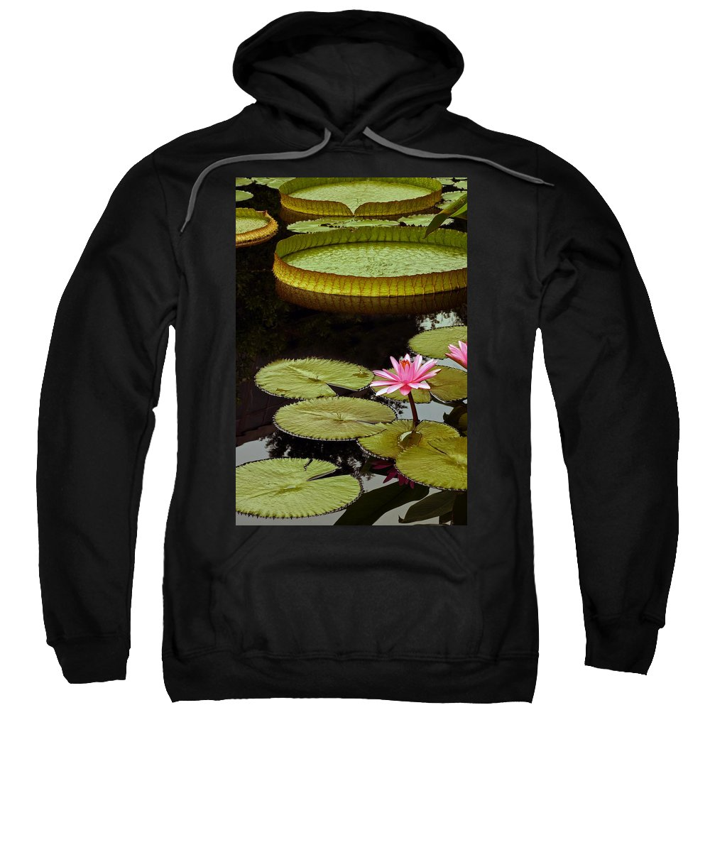 Pink Tropical Waterlily And Pads Sweatshirt featuring the photograph Waterlilies And Platters Vertical Romance by Byron Varvarigos