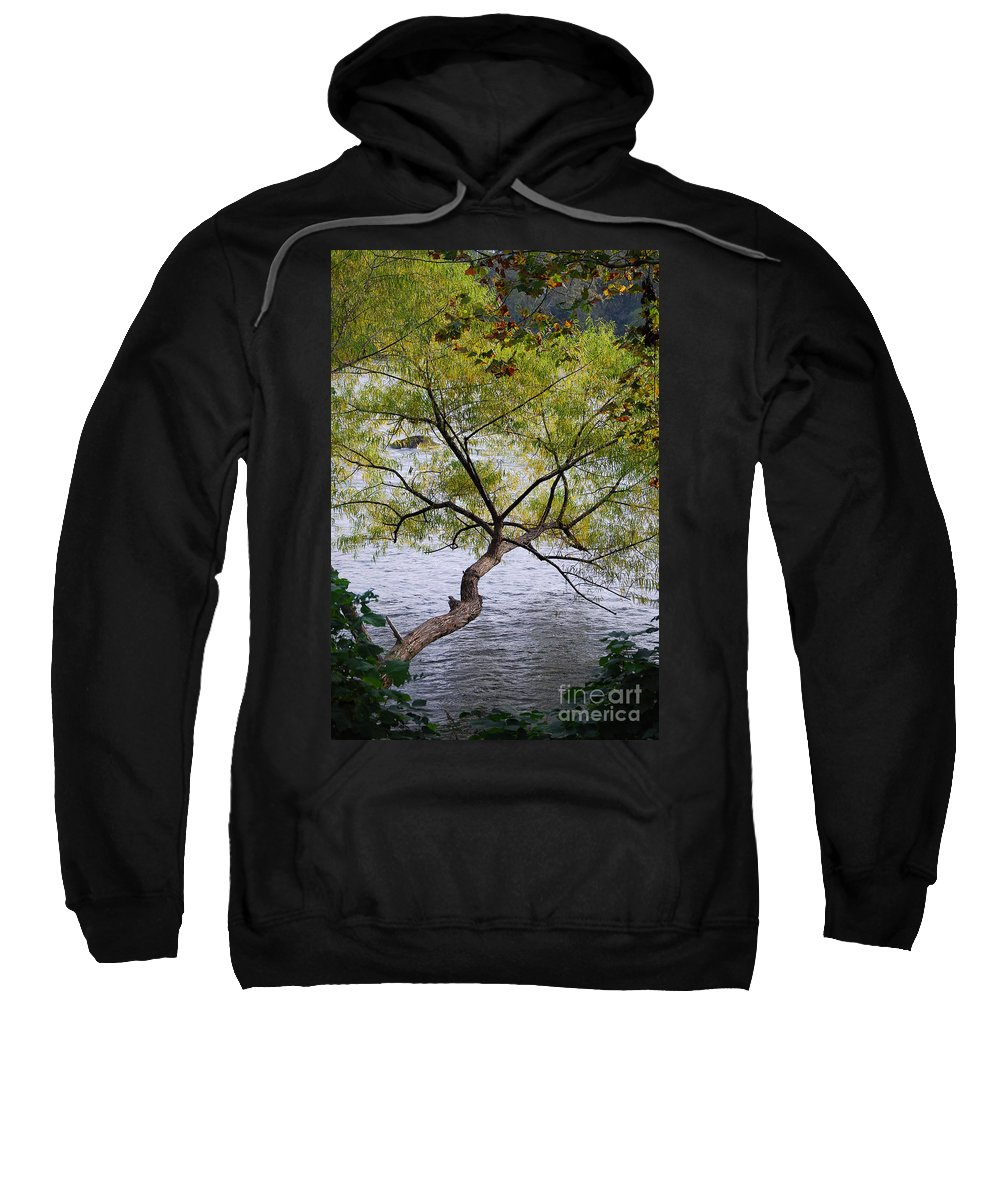 Scenic Tours Sweatshirt featuring the photograph Weeping Willow by Skip Willits