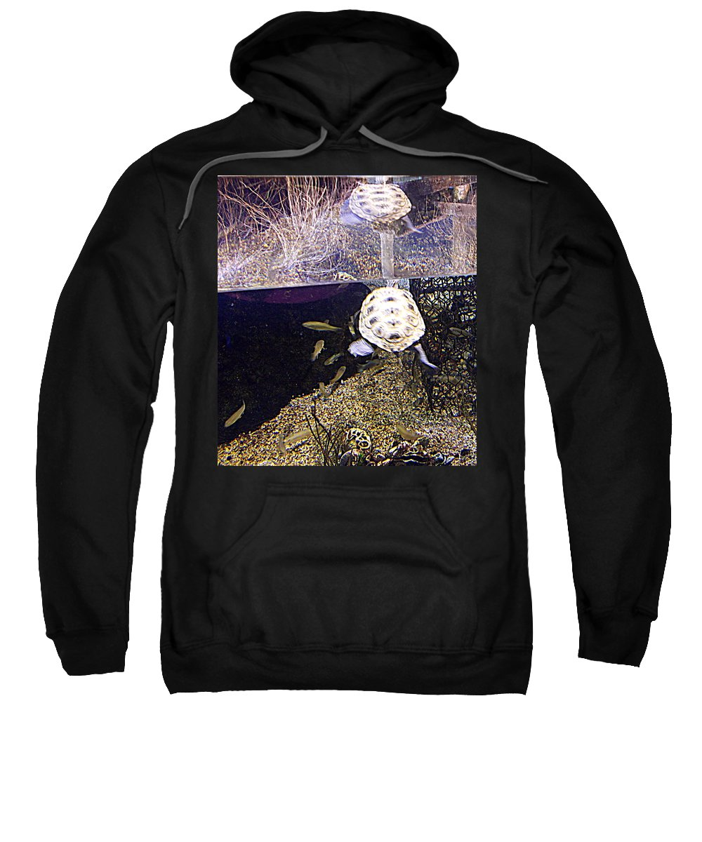 Aquarium Sweatshirt featuring the photograph Well Hello There by Pamela Hyde Wilson