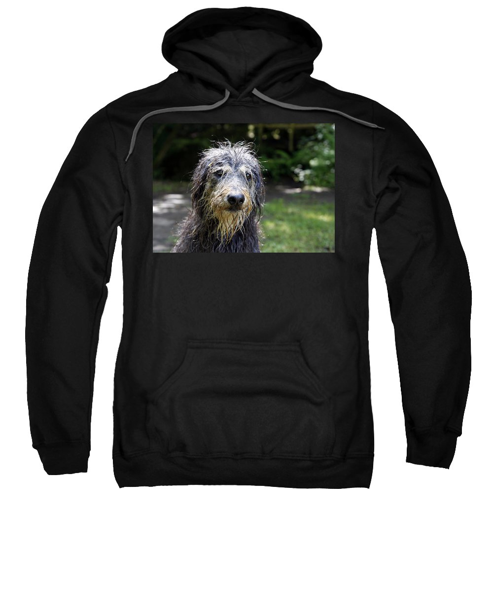 Dog Sweatshirt featuring the photograph Wet Dog by Steve Ball