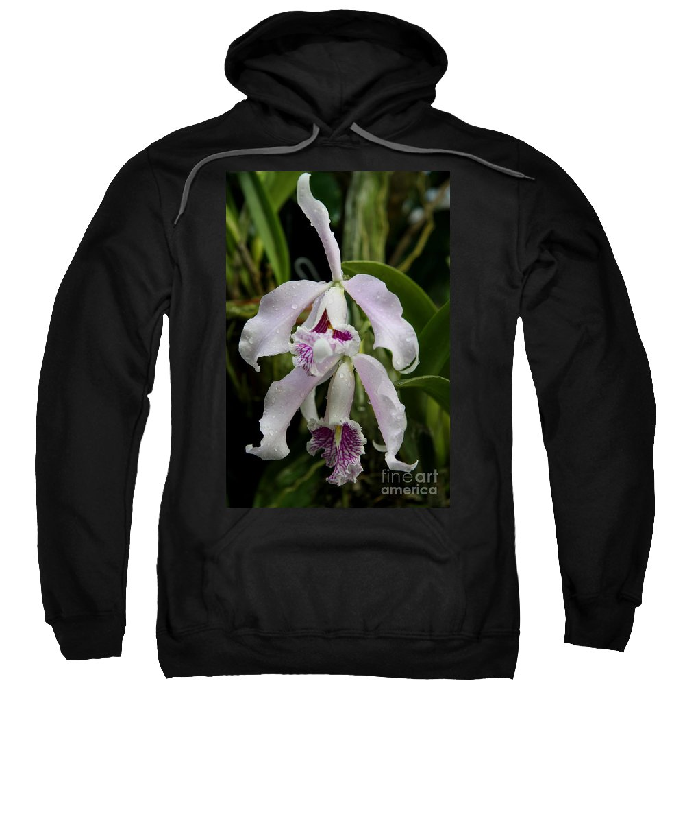 Orchid Sweatshirt featuring the photograph Wet Faces by Christiane Schulze Art And Photography