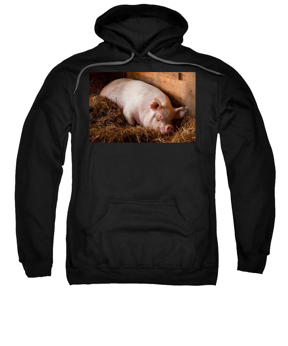 Pig Sweatshirt featuring the photograph When Pigs Fly by Troy Corbett