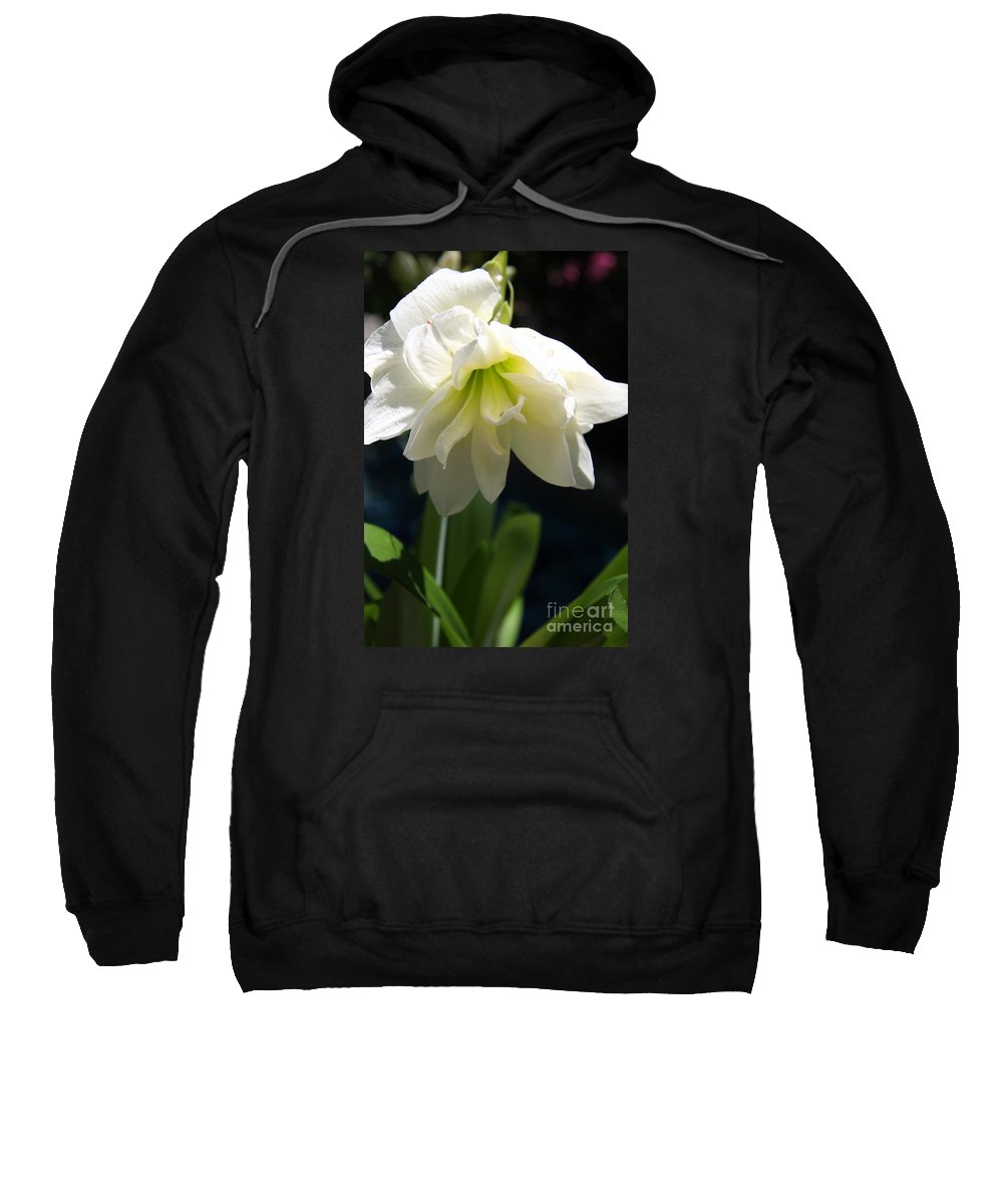 Amrillys Sweatshirt featuring the photograph White Amarillys by Christiane Schulze Art And Photography