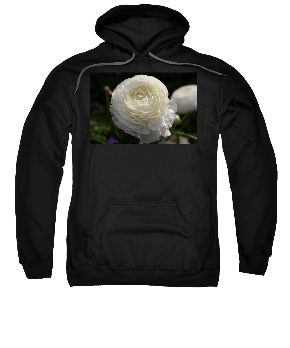 White Buttercup Sweatshirt featuring the photograph White Buttercup - Ranunculus by Christiane Schulze Art And Photography
