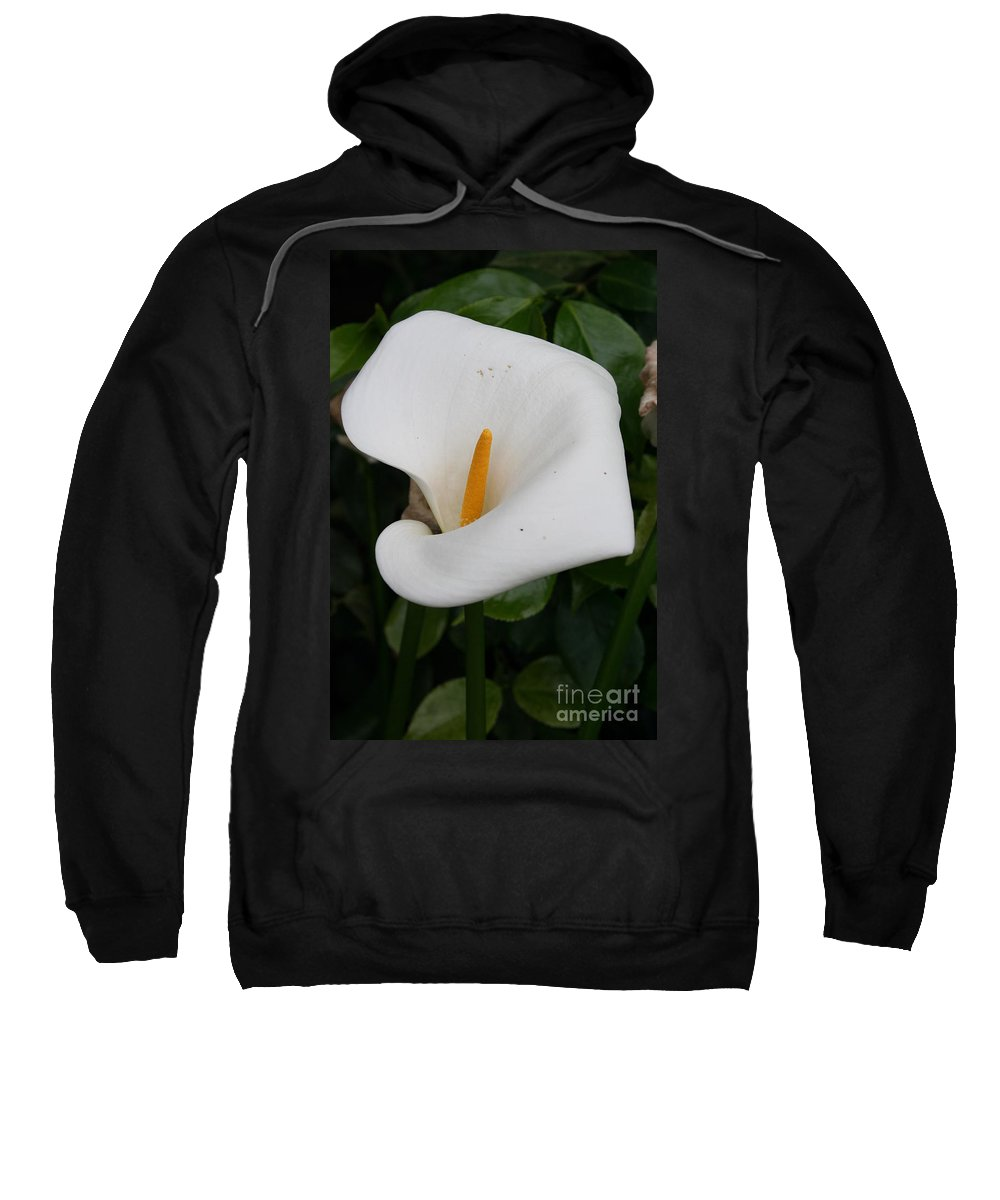 White Calla Sweatshirt featuring the photograph White Calla Lilly by Christiane Schulze Art And Photography