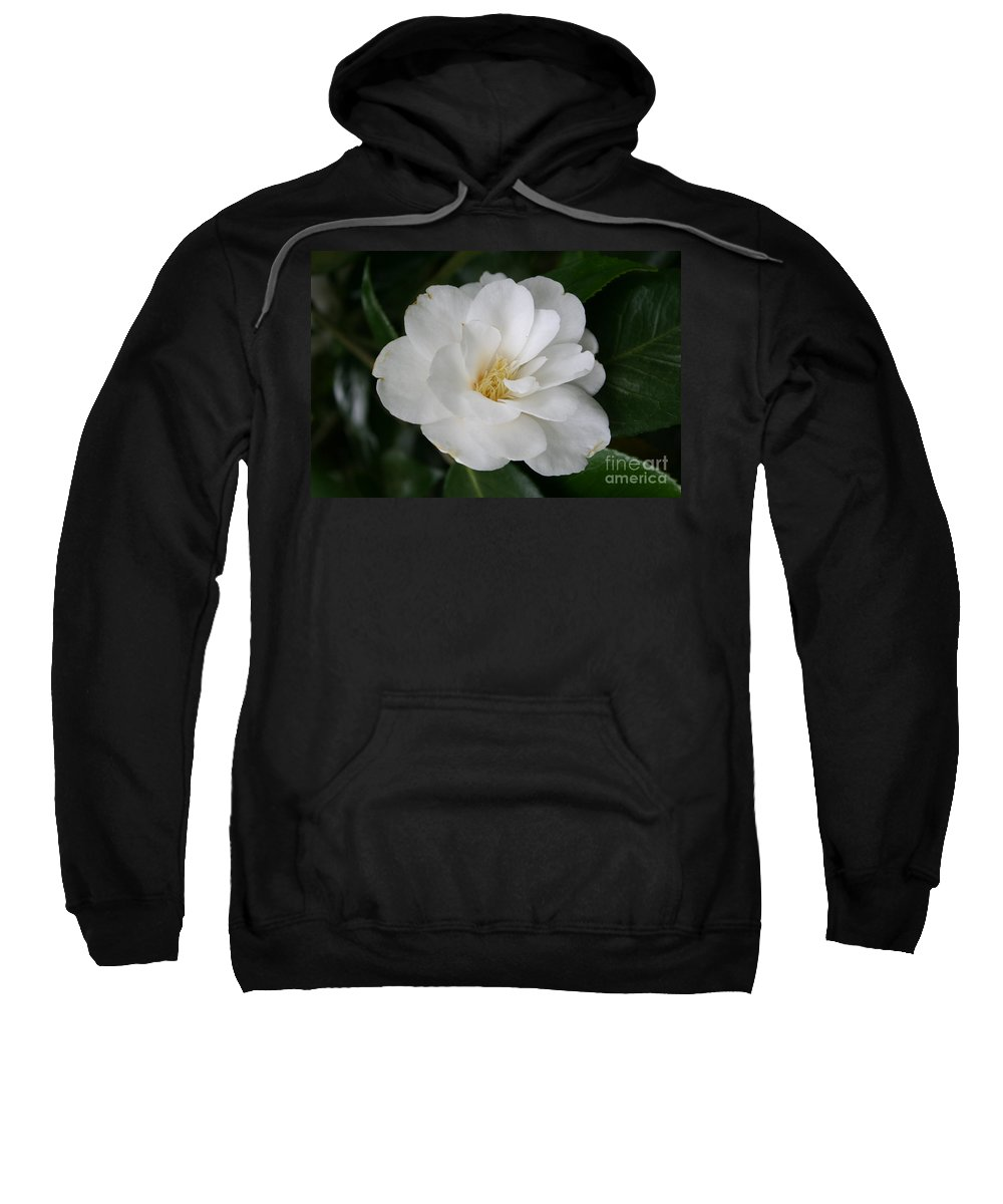 White Camellia Sweatshirt featuring the photograph Snow White Camellia by Christiane Schulze Art And Photography