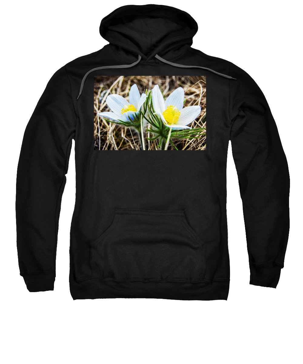 Britain Sweatshirt featuring the painting White Pasque Flower by Jeelan Clark