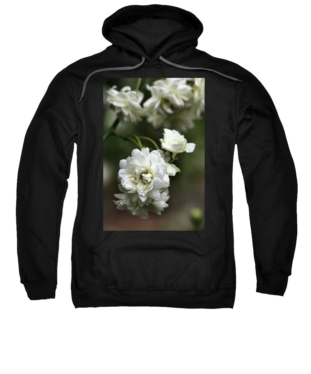 Plant Sweatshirt featuring the photograph White Roses by Joy Watson