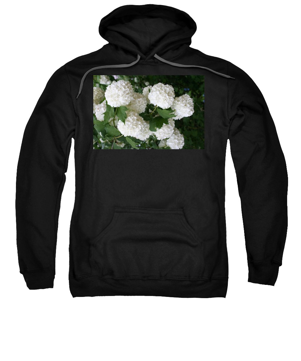 White Snowball Sweatshirt featuring the photograph White Snowball Bush by Christiane Schulze Art And Photography