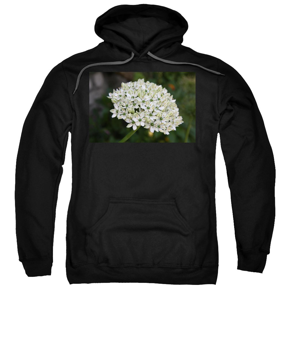 Umbel Sweatshirt featuring the photograph White Umbel by Christiane Schulze Art And Photography