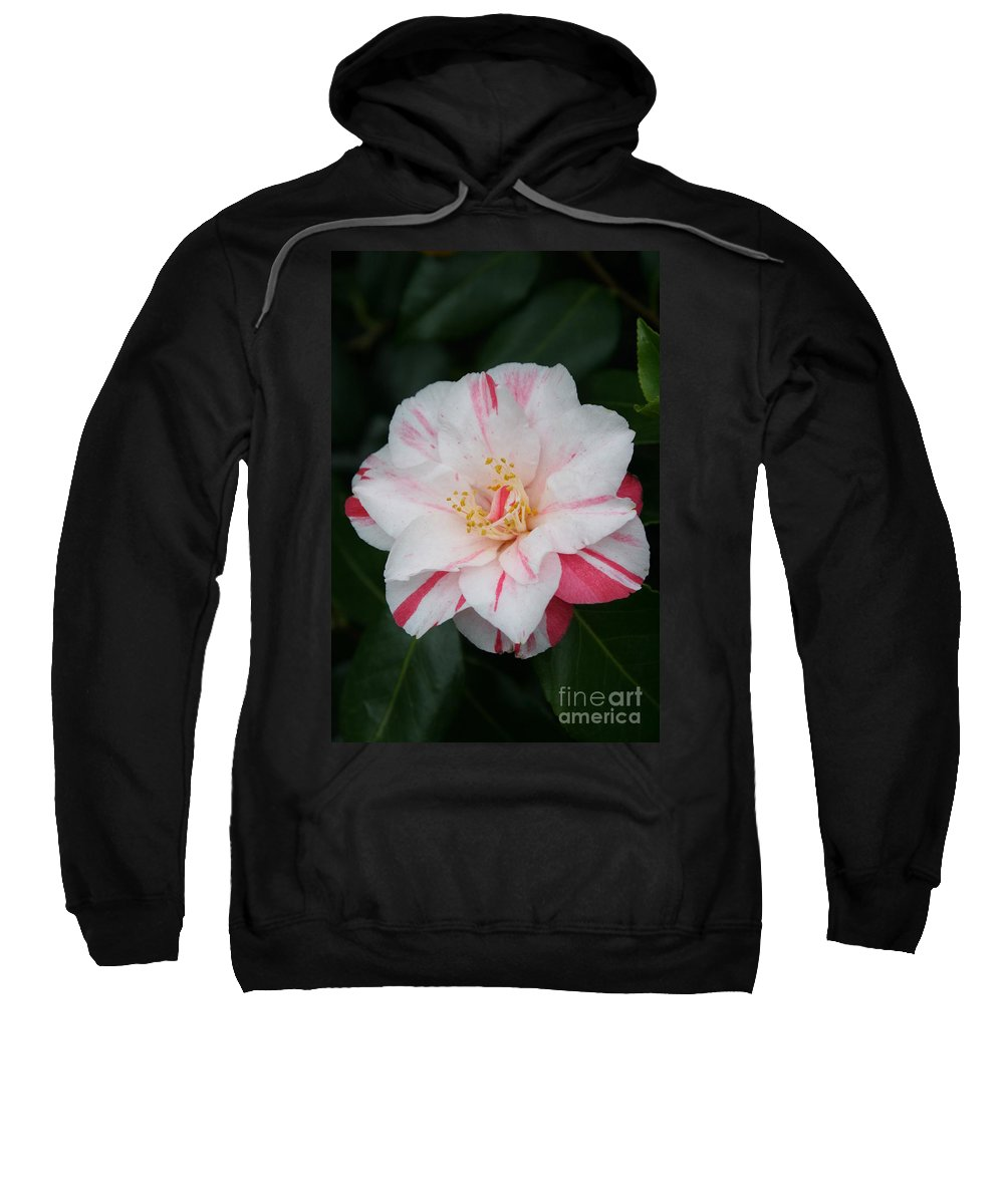 White Camellia Sweatshirt featuring the photograph White With Pink Camellia by Christiane Schulze Art And Photography