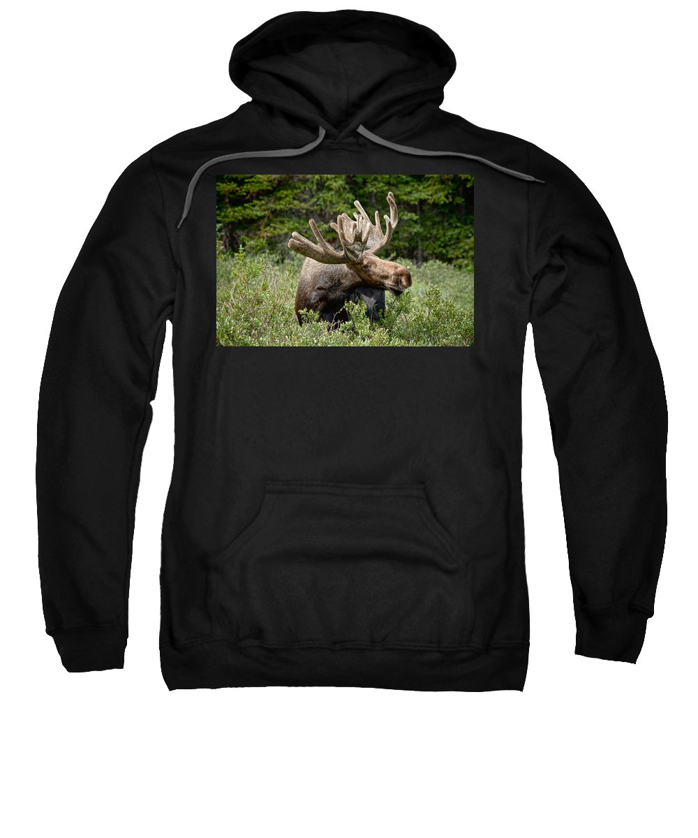 North America Moose Sweatshirt featuring the photograph Wild Bull Moose by James BO Insogna