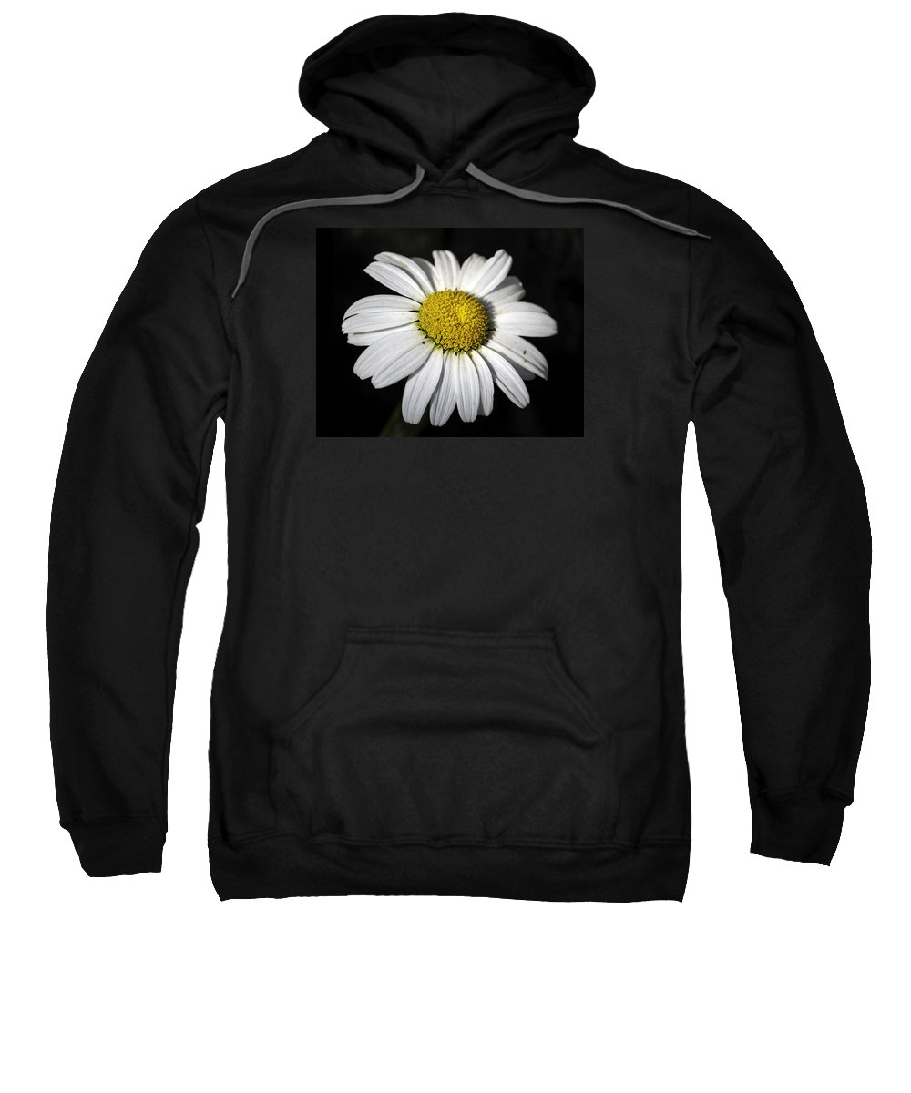 Color Digital Photography Sweatshirt featuring the photograph Wild Daisy Tacoma Washington by Paul Shefferly