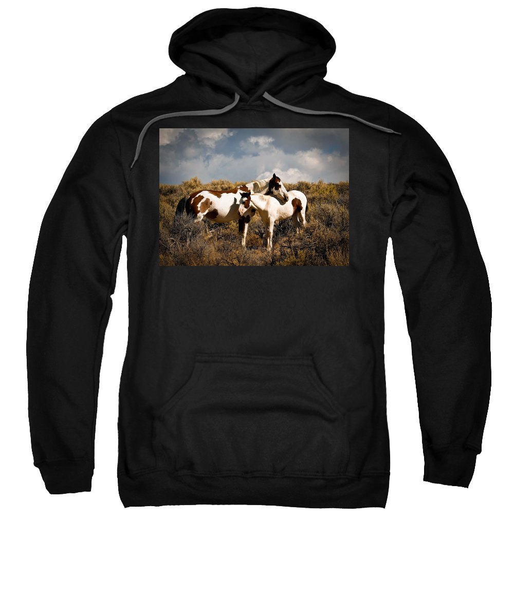 Horses Sweatshirt featuring the photograph Wild Horses Mother And Child by Steve McKinzie