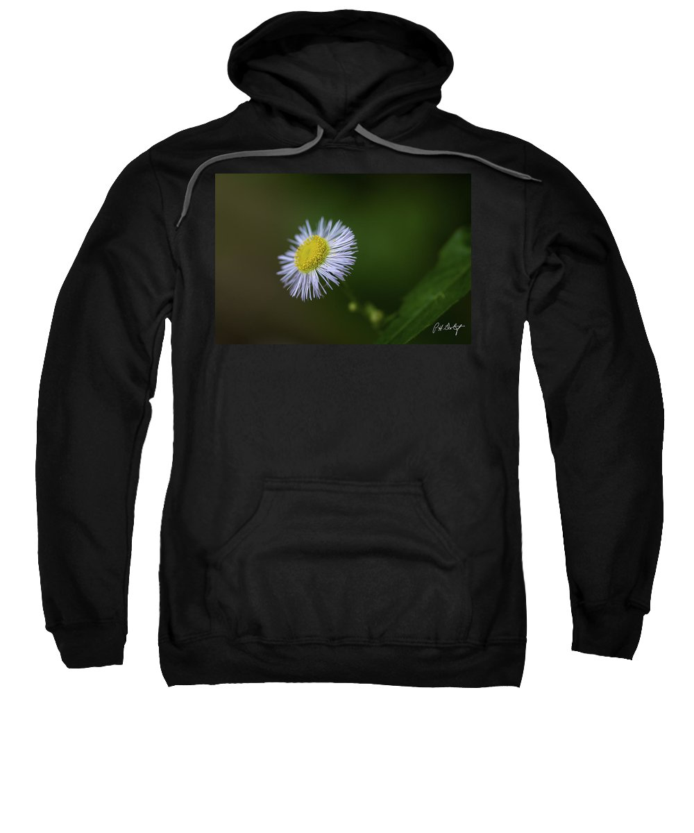 Belfountain Sweatshirt featuring the photograph Willow Aster by Phill Doherty