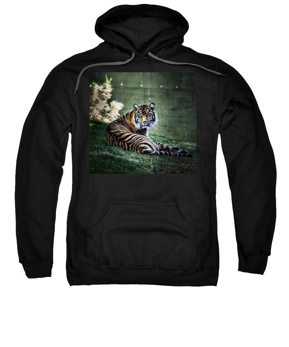 Sumatran Tiger Sweatshirt featuring the photograph Windows To My Soul by Saija Lehtonen