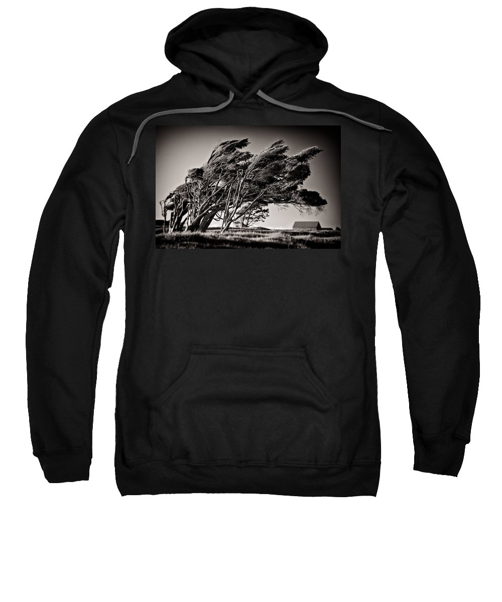 Windswept Trees Sweatshirt featuring the photograph Windswept by Dave Bowman