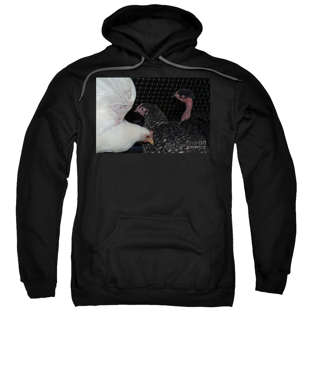 Bird Sweatshirt featuring the photograph Wings Of A Chicken by Donna Brown