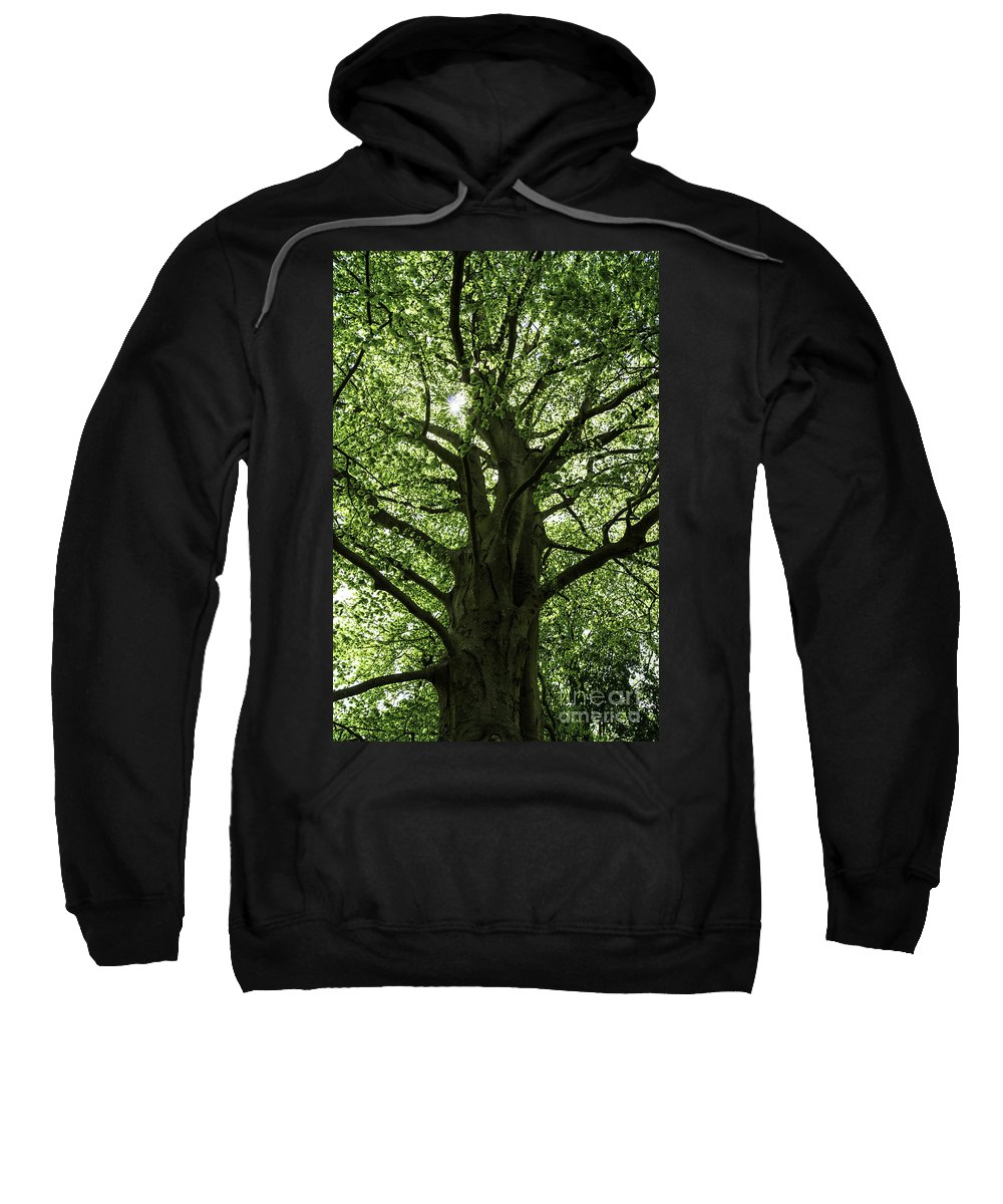 Tree Sweatshirt featuring the photograph Witness Tree by Joe Geraci