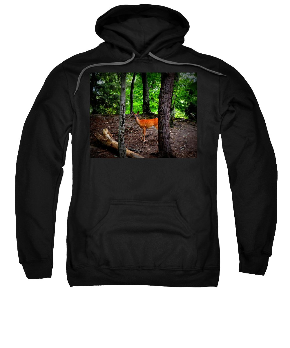 Trees Sweatshirt featuring the photograph Woodland Deer by Michelle Calkins
