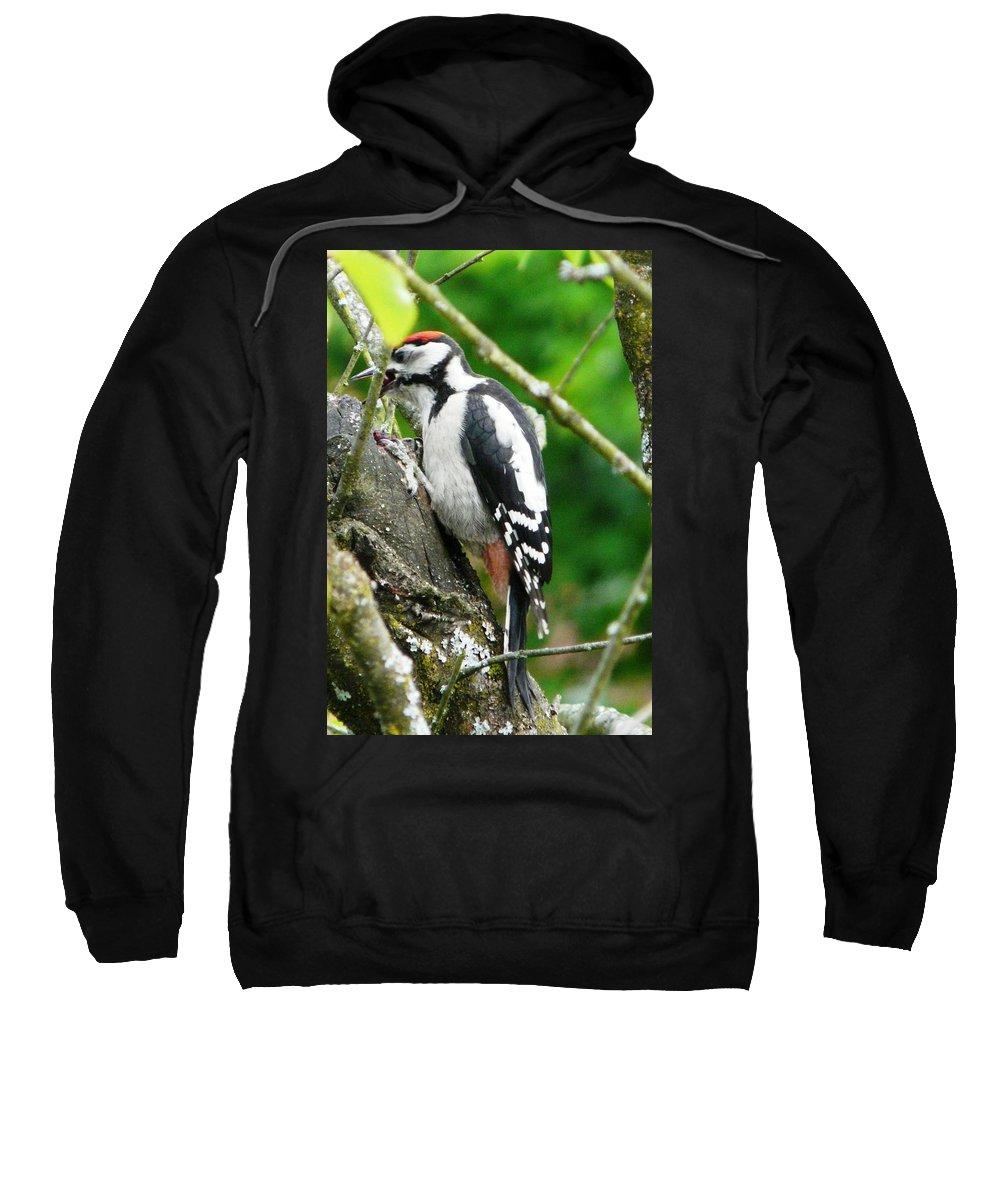 Bird Sweatshirt featuring the photograph Woodpecker Swallowing A Cherry by Valerie Ornstein